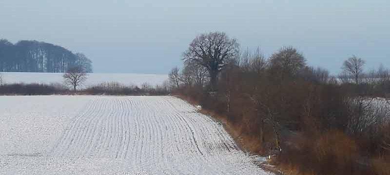 Acker und Knicks im Schnee
