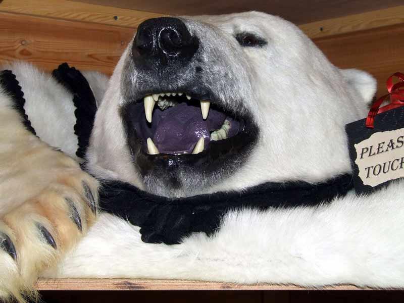 Eisbärfell im Souvenirladen in Longyearbyen