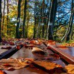 Wassertropfen: wenn im Zauberwald die Kamera runterfällt