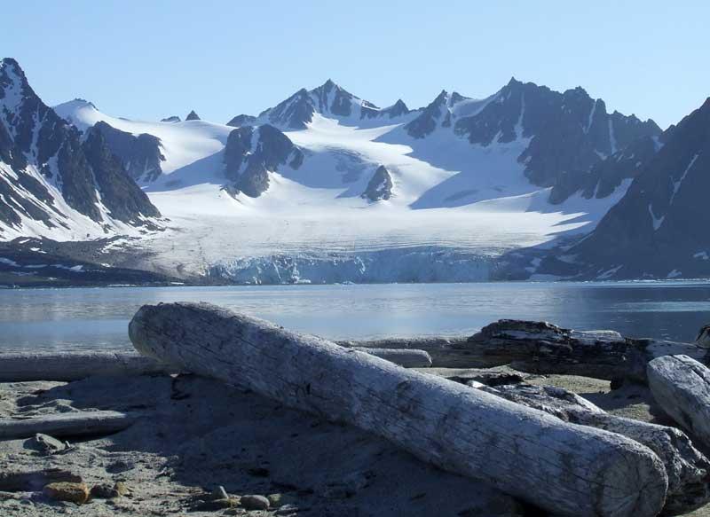 Treibholz auf Spitzbergen