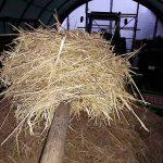 Fru Öttenpötter vertellt: fluffiges Weizenstroh