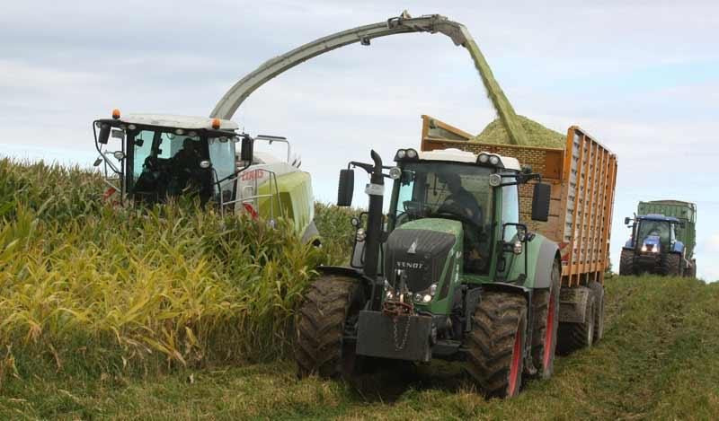 Maishäcksler bei der Arbeit: Die Ernte fließt sofort in einen Ladewagen.