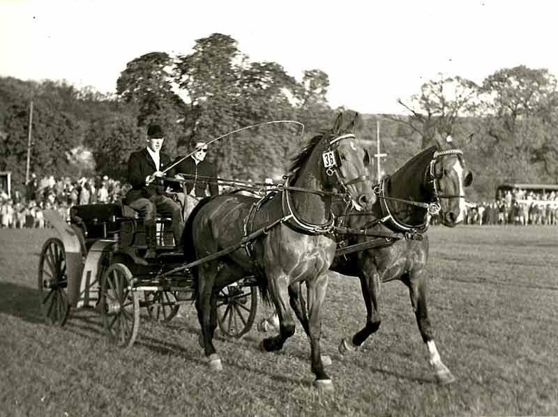 Fahrturnier im Park von Kloster Corvey (1950er-Jahre).