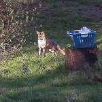 Fru Öttenpötter vertellt: Fuchs im Garten