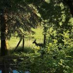 Fru Öttenpötter vertellt: Hirsch im Garten