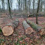 Fru Öttenpötter vertellt: Holzernte oder das große Sägen
