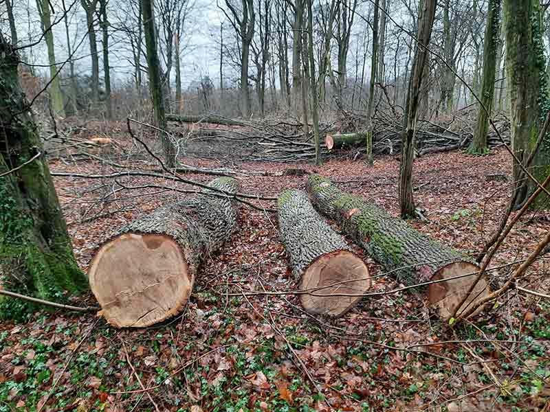 In einem Wald liegen drei große Baumstämme nebeneinander, dahinter stapelt sich Astwerk.