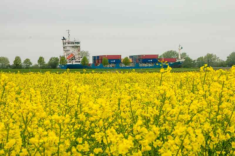 Ein Container-Schiff fährt scheinbar auf einem Rapsfeld.