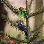 Fru Öttenpötter vertellt: Weihnachtsbaum mit Meisenknödeln