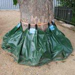 Die seltsamen Säcke am Fuß der Bäume