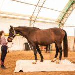 Fru Öttenpötter vertellt: Ab auf die Pferdewaage