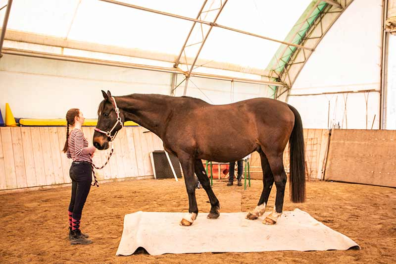 Ein Pferd steht auf einem weißen Teppich, unter dem sich die Waage verbirgt.