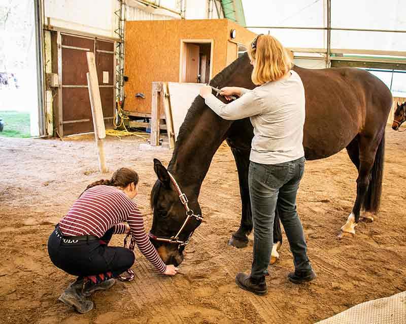 Ein Pferd hat den Kopf ganz nach unten gestreckt, damit der Hals gemessen werden kann.