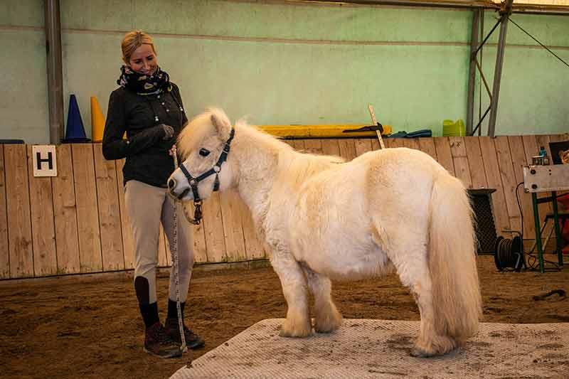 Ein winziges weißes Pony steht mit seiner Besitzerin an und auf der Pferdewaage.